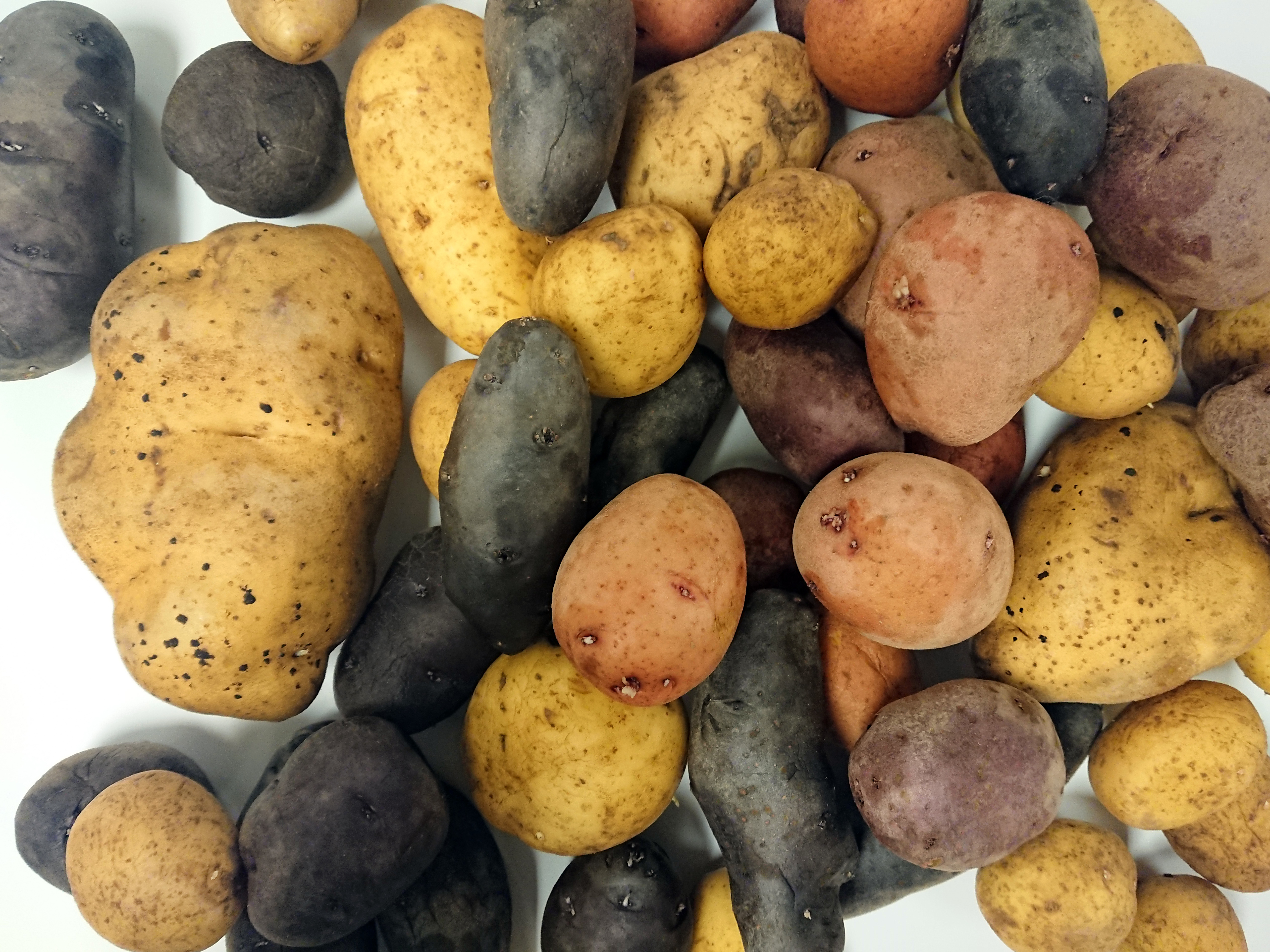 Newswise: Sensory research digs deep to understand why people like potatoes